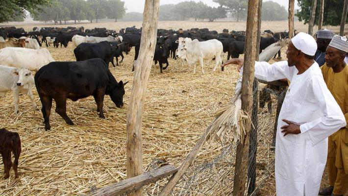 Buhari in his farm