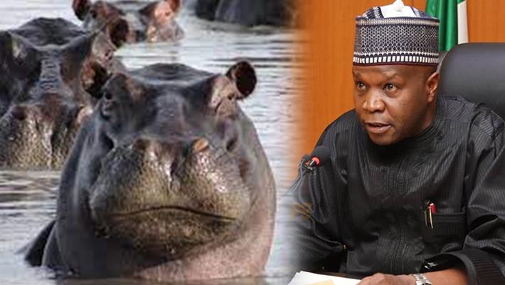 Yahaya and Hippopotamus