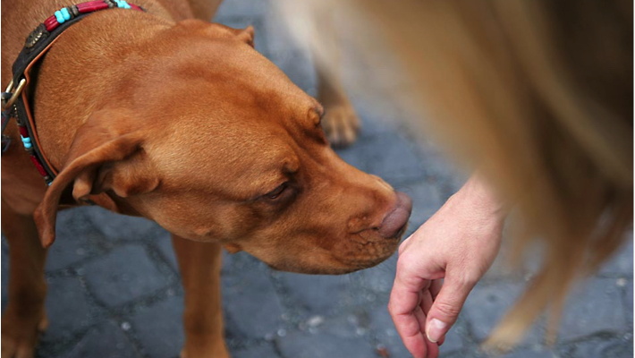 dogs sniffing humans